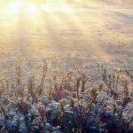 霜降(そうこう)とは?~その意味と季節・季語・養生法【二十四節気】